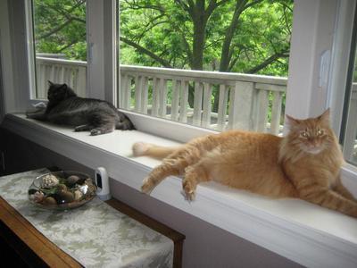 Leo & Sylvester