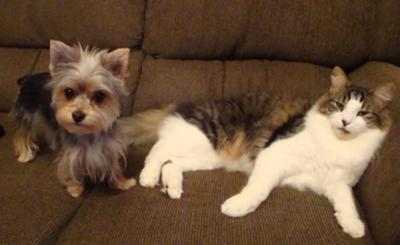 Little Kitty & my morkie