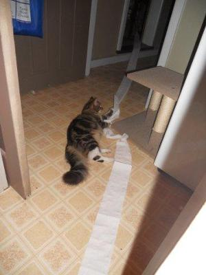 caught taking the toilet paper from bathroom to loungroom to play
