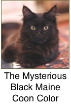 The Mysterious Black Color