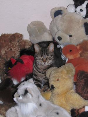 In amongst the teddy bears