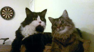 Thunder and Charlie