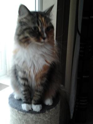 Tilly