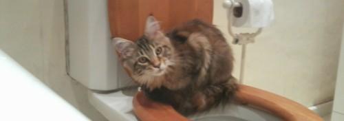 kitten sitting on toilet