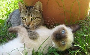 two different kittens playing outside in grass