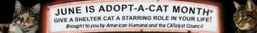 adopt a cat month banner
