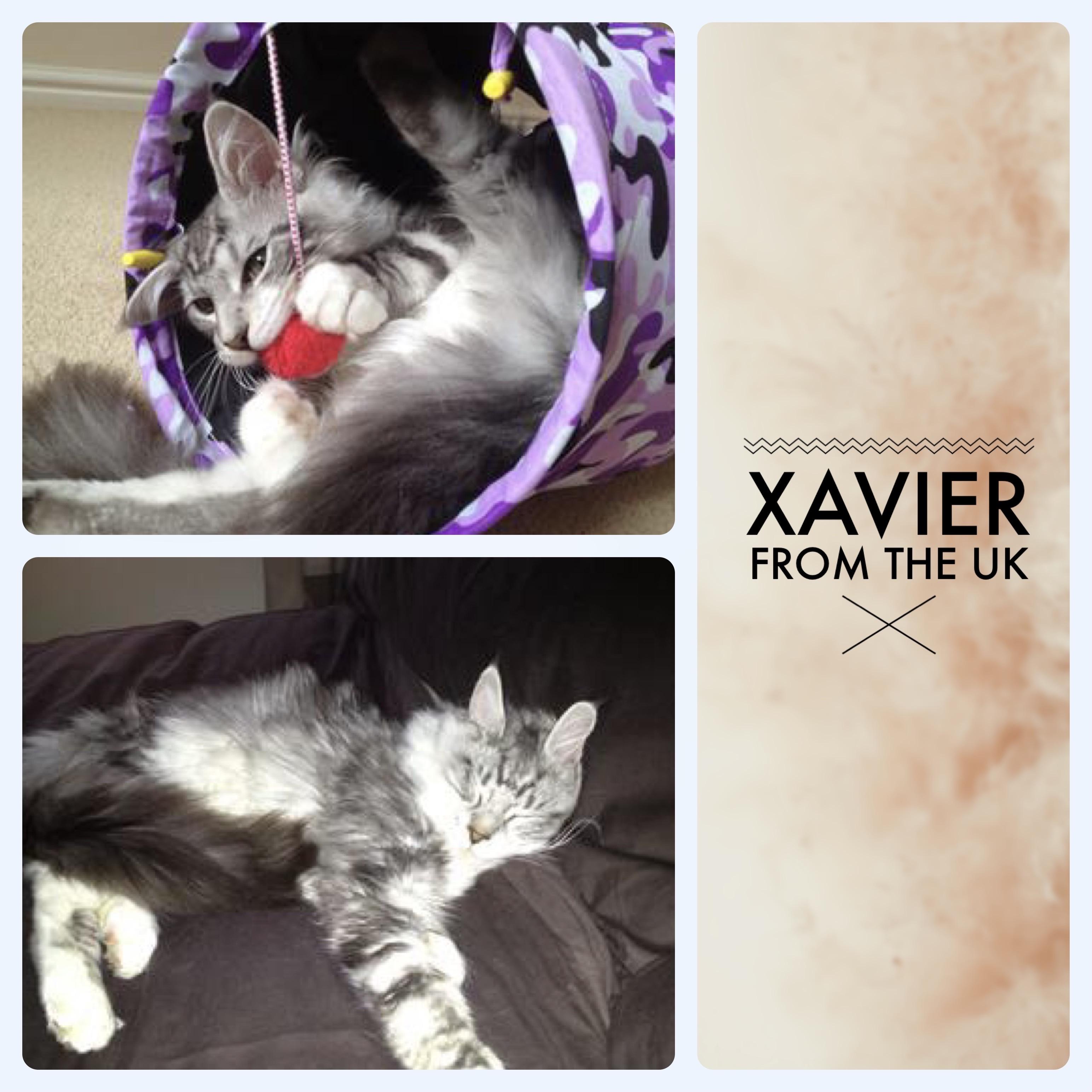 xavier kitten