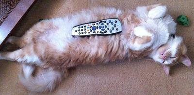 Anyone seen the remote?
