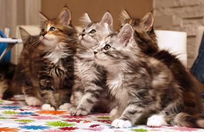 Betty's kittens