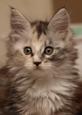 Betty's kitten