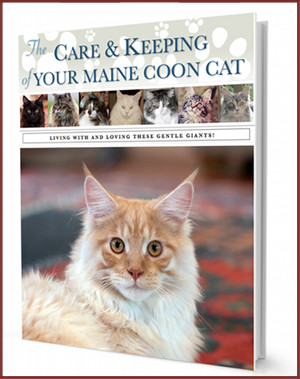 maine-coon-care-guide