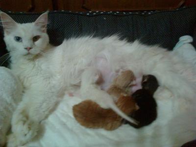 Coockie & Kittens