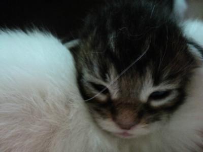 Coockie's Kitten