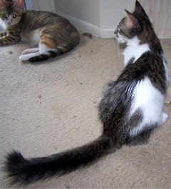 Look at that tail!