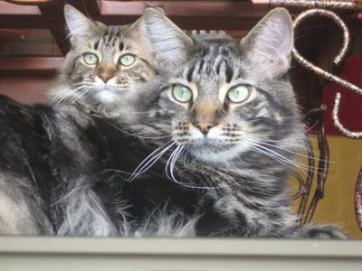 Hugo and Mylla