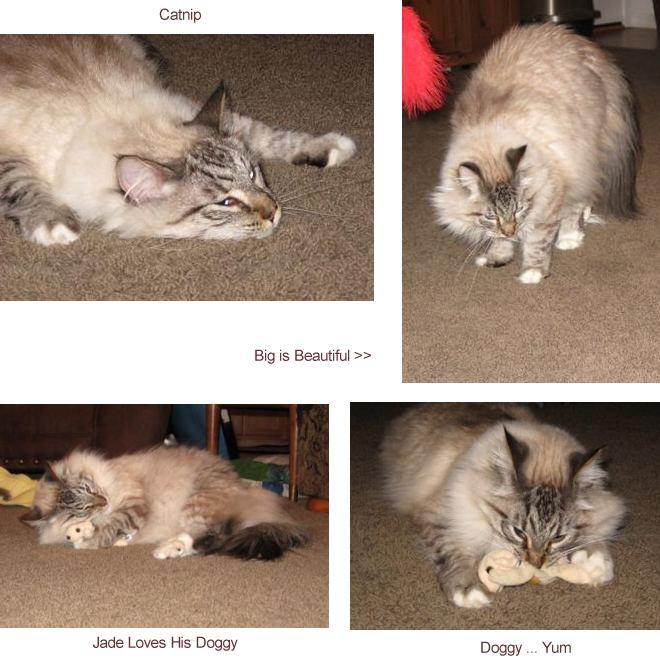 four photos of jade the cat