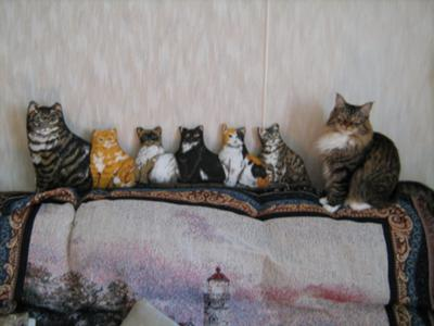kitty the maine coon mix lined up with stuffed animals