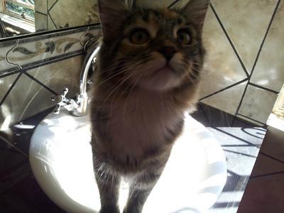 Martin's cat