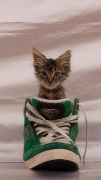 mike patton, kitten in shoe