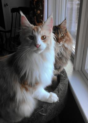 Moxie & CJ