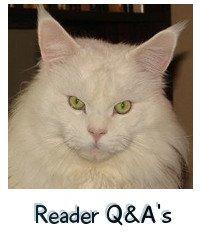 stunning white cat