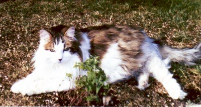 Regis a few months before he passed in 2008