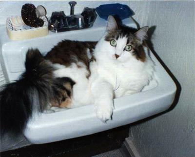 Regis in the sink