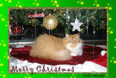 Merry Christmas From Rocky