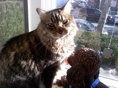 Sir Kitty Coon