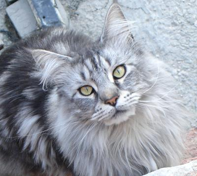 Cannaregio Cat