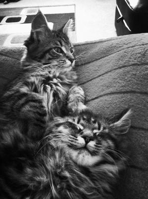 Vic & Bob