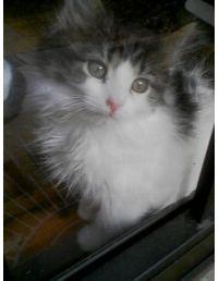 Cute Fuzzy Kitten