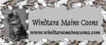 Windtara Maine Coons