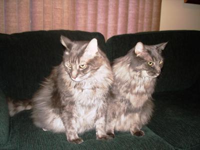 Yoda & Kiko